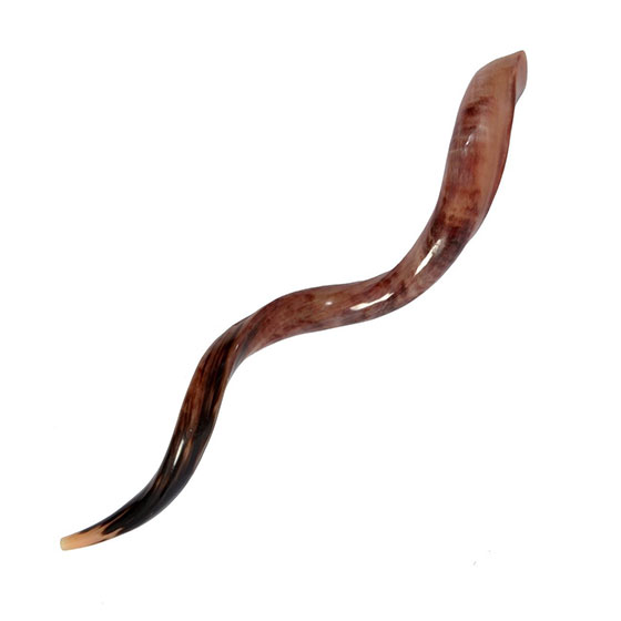 High Quality Yemenite Shofar Kosher & Polish