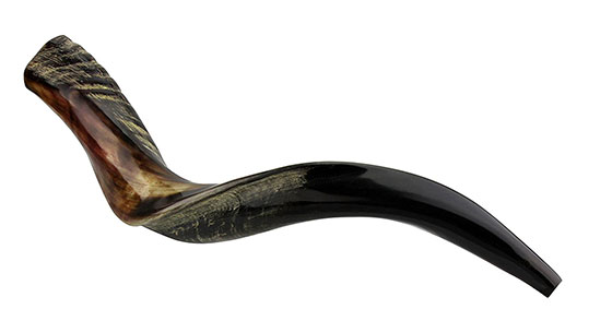 Kosher Yemenite Kudu Horn Fully Polished Shofar