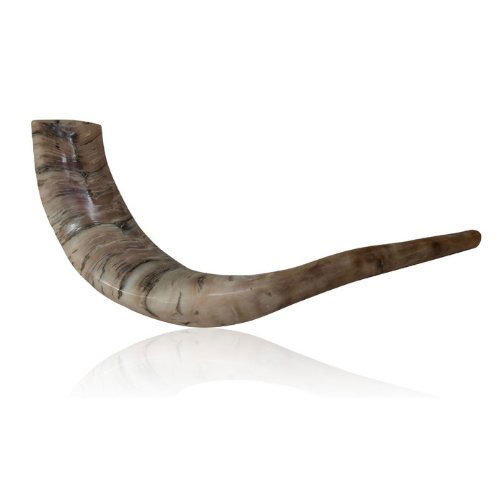 Polished Ram Horn Shofar With Wide Bend And Natural Colors