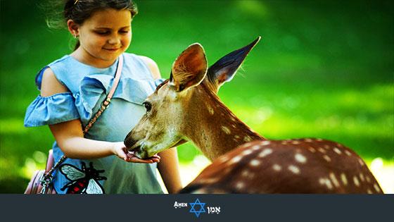 Bar Mitzvah Project Feeding Animals