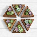 6 Handmade Wooden Succulent Triangles