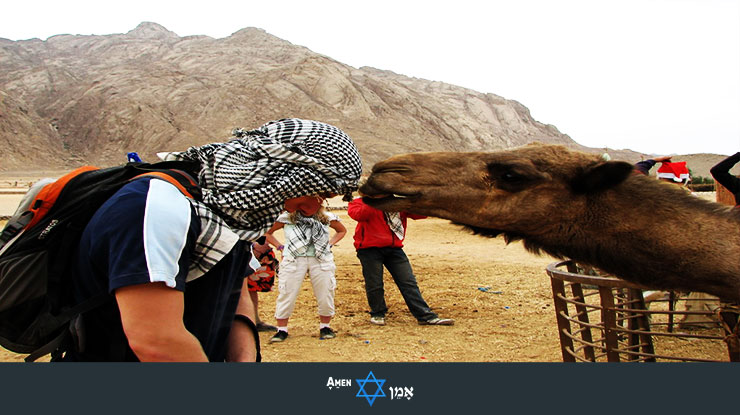 Licked By Camel In Israel